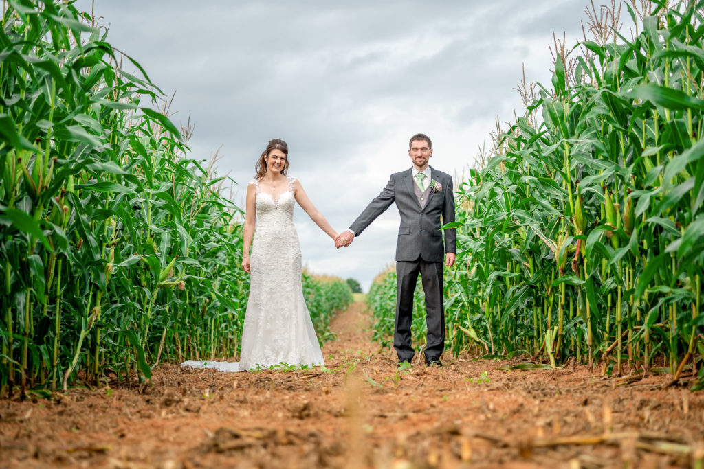 A bride and groom holding hands in a corn field on their wedding day at Quantock Lakes in Somerset.